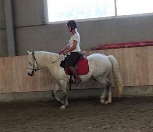 capitaine draf horsesmind equitation centree centered riding