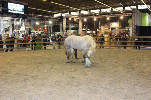 Horse's Mind leren apporteren
