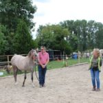 clickertraining paard cheval horse